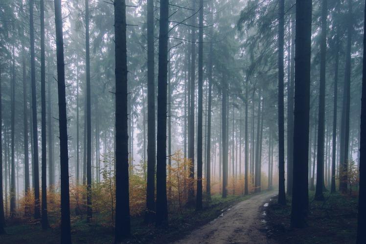 forest-2179318_1920.jpg